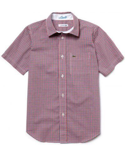 Красная рубашка хлопковая Lacoste