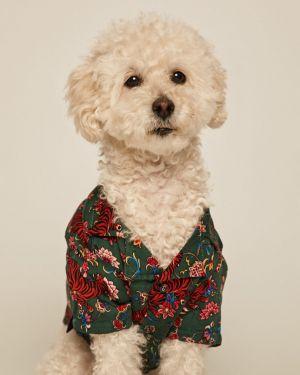Koszula z wiskozy turkusowa zapinane na guziki Medicine