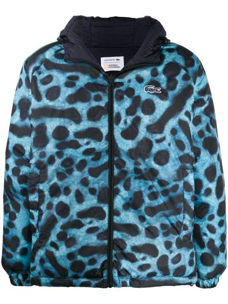 С рукавами синяя длинная куртка с капюшоном Lacoste